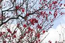 サムネイル:梅の写真